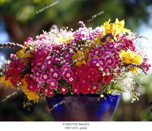 Colourful bouquet with sweet william