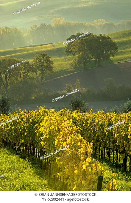 Early morning view over vineyards and countryside of Val d'Orcia near San Quirico d'Orcia, Tuscany, Italy