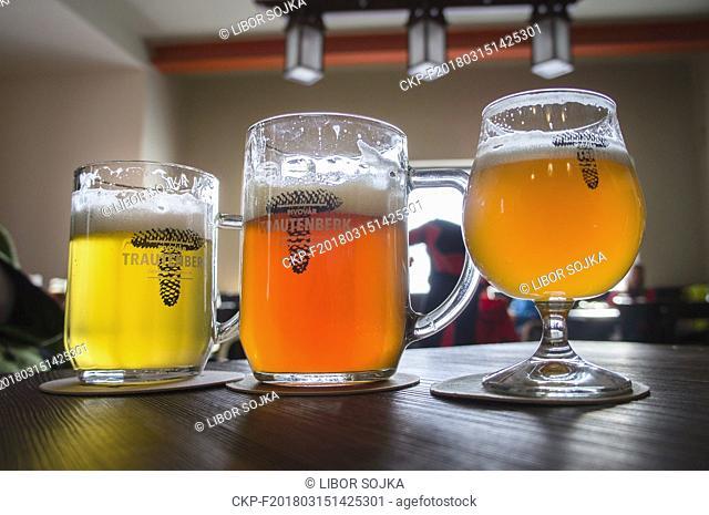 light lager, beer glass, half litre, pint, half, Trautenberk Brewery, on March 3, 2018. (CTK Photo/Libor Sojka)