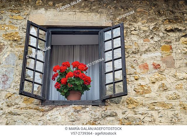 Flowered geranium in an open window. Santillana del Mar, Cantabria, Spain