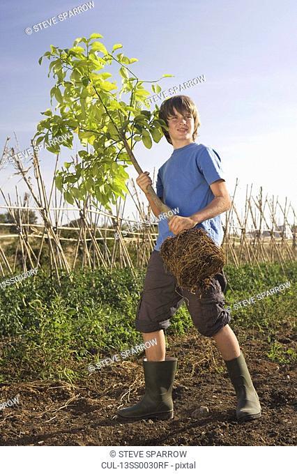Pre-adolescent boy holding tree