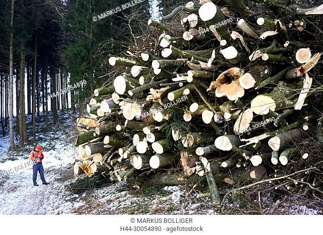 Burgdorf, Pleerwald, winter, wood, wood, Polter, beechwood, resource, beech, Fagus sylvatica, wooden production, firewood
