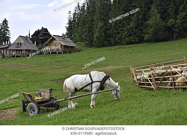 cheval et carriole servant a transporter les bidons de lait dans la prairie en aval de la ferme Szymkowka, Brzegi, region Podhale, Massif des Tatras
