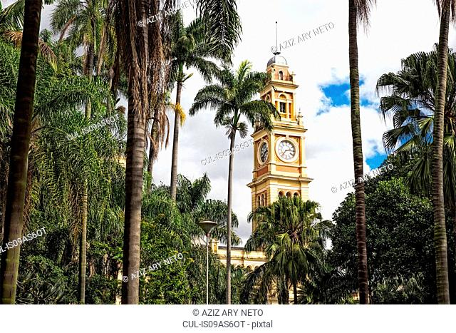 View of Luz railway station clock tower and palms, Sao Paulo, Brazil