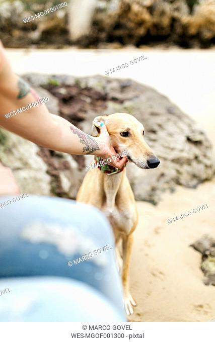 Spain, Llanes, young woman stroking her greyhound on the beach