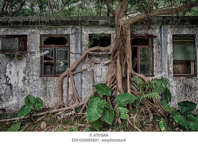 An old weathered abandon residence in the forests on Lantau island,Hong Kong