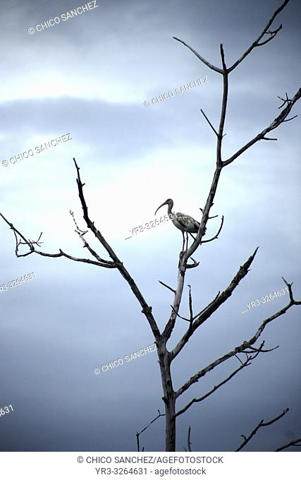 A bird perchs on a tree branch in Yucatan, Mexico, June 21, 2009