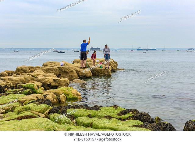 Family pond dipping on Seaview beach, Isle of Wight, UK