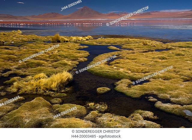 Laguna Colorada 4304 ms with flamingos and with volcano Pabellon