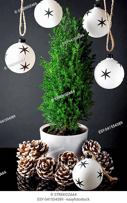 Small green cypress in the cup with pine cones, Christmas ball on a dark background