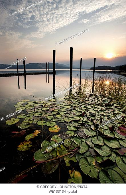The colorful sunrise shines over the calm lake and lily pads on Chatcolet Lake near Plummer, Idaho