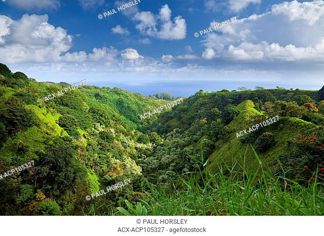 Lush rainforest valley, Maui, Hawaii