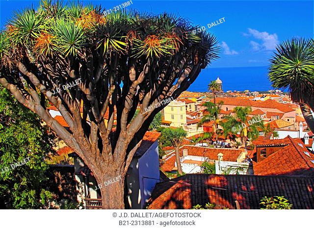 La Orotava, Tenerife, Canary Islands, Spain