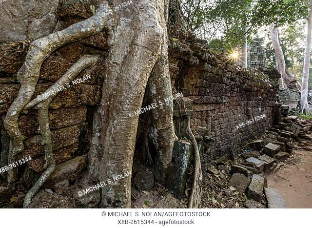 Ta Prohm Temple, being destroyed by jungle growth, Angkor, Siem Reap Province, Cambodia, Khmer