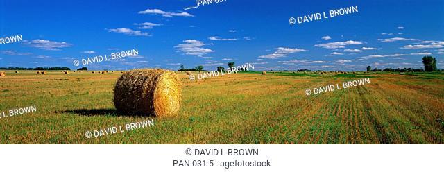 Hay Bales, South Dakota, USA