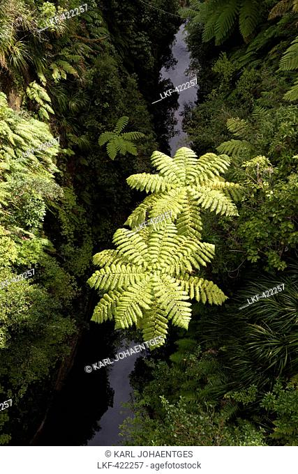 blocked for illustrated books in Germany, Austria, Switzerland: Tree ferns above a tributary river of the Whanganui River, View from Bridge to nowhere