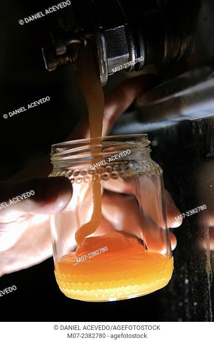 Italian Honey, Tuscany, Europe