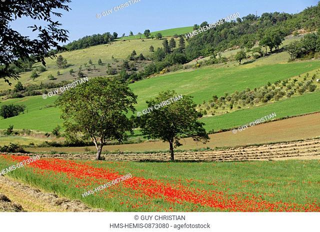 France, Aveyron, Parc Naturel Regional des Grands Causses (Natural regional park of Grands Causses), agricultural landscape, near Millau