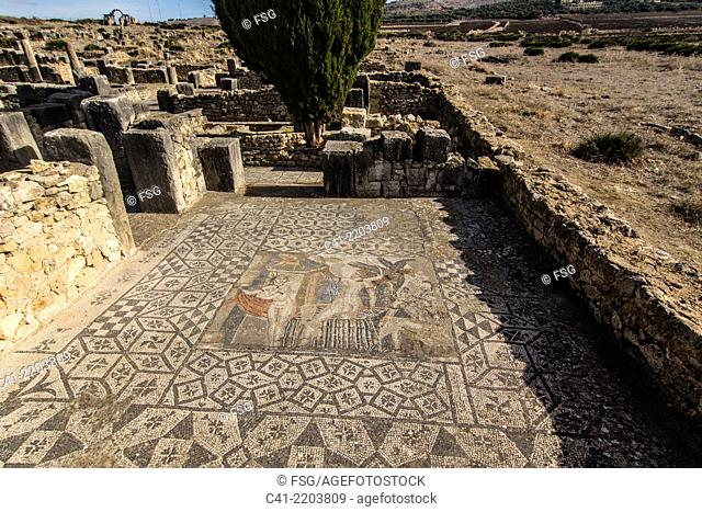 Roman ruins of Volubilis. Morocco