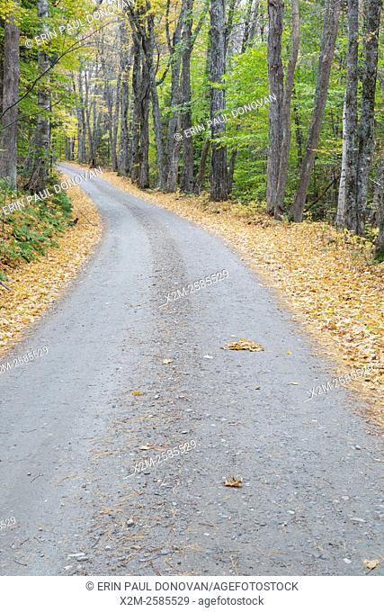 Leaf drop along Long Pond Road (old North and South Road) in Benton, New Hampshire USA during the autumn season