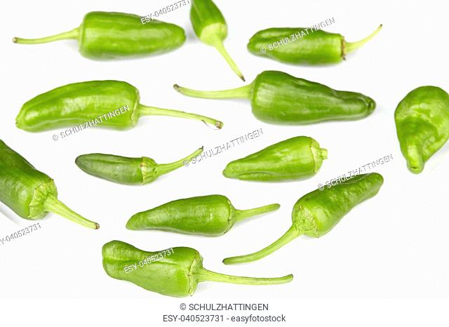 Padron chilis on a white china plate.Cooking: fry the habanero chilis into a pan with hot olive oil until the chilis become a olive-green to brwon color