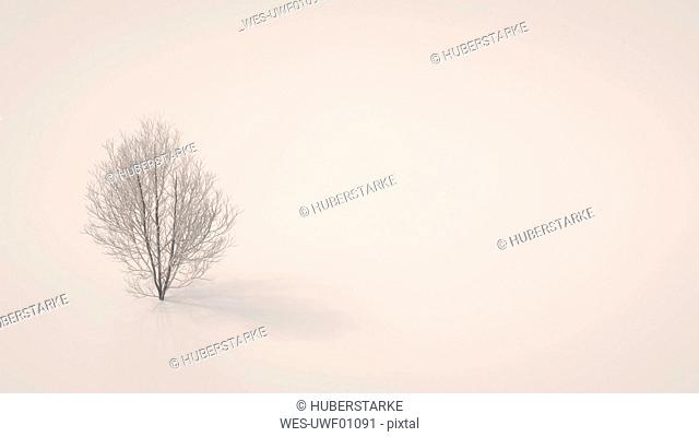 3D rendering, Bare maple tree on white background