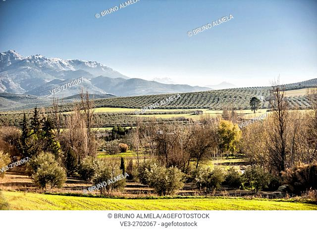 View of olive fields near Cazorla in western slope of Cazorla mountain range in Sierras de Cazorla, Segura y las Villas Natural Park (Jaén Province