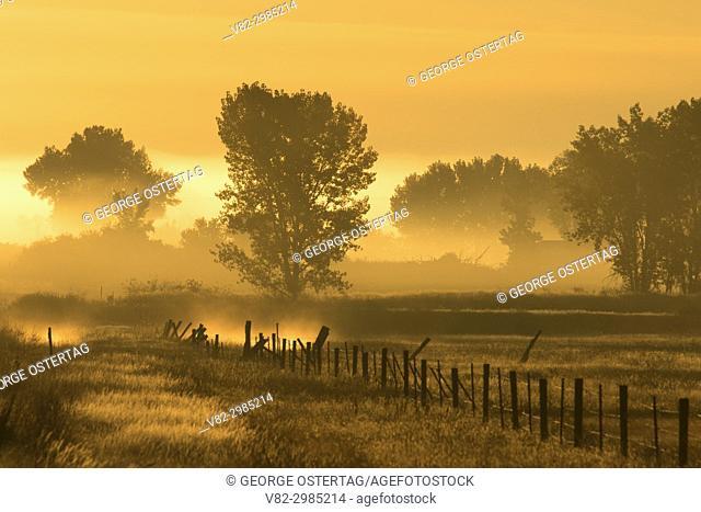 Ranchland fog, Rosebud County, Montana