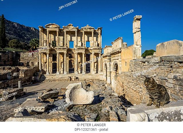 Cat sitting on a stone wall in the foreground and the Library of Celsus in the background; Ephesus, Izmir, Turkey