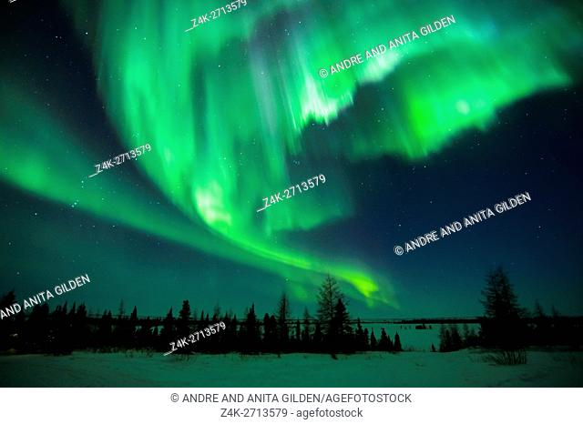 Nightsky lit up with aurora borealis, northern lights, wapusk national park, Manitoba, Canada