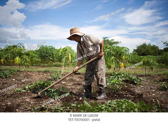 Cuba, Las Tunas, Farmer digging in field