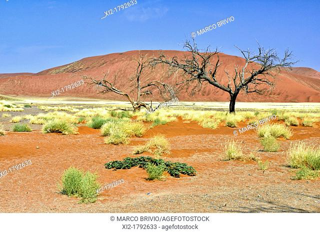 Sand dunes - Namib Naukluft Park. Sossusvlei, Namibia