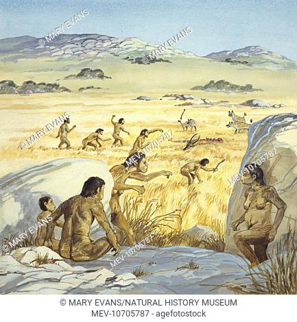 An illustration showing a Homo habilis scene: After watching hyenas kill an antelope, the Homo habis would chase them away and steal the kill for themselves