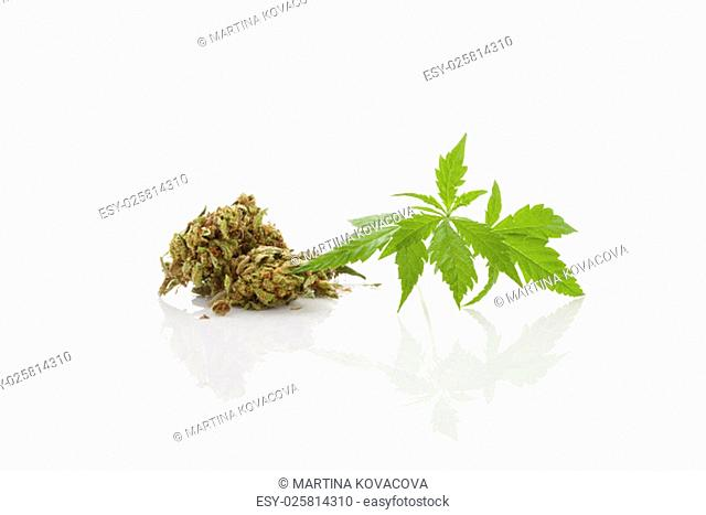 Cannabis bud and leaves isolated on white background. Traditional herbal medicine, alternative medicine