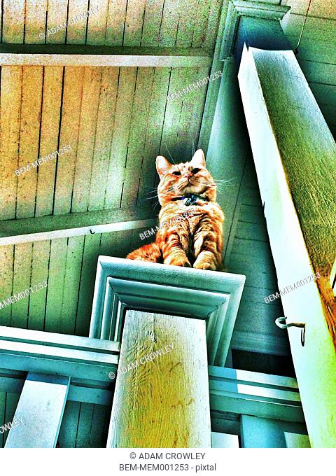 Cat on bannister