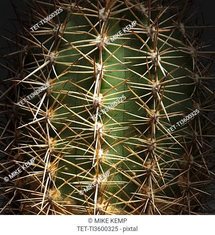 Prickly thorns on cactus