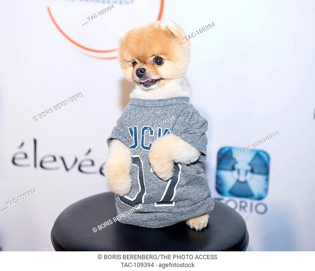 Jiff Pom strikes a pose for a photo at the Glazer Palooza + Suits & Sneakers Red Carpet event on February 3rd at Pier 27 in San Francisco