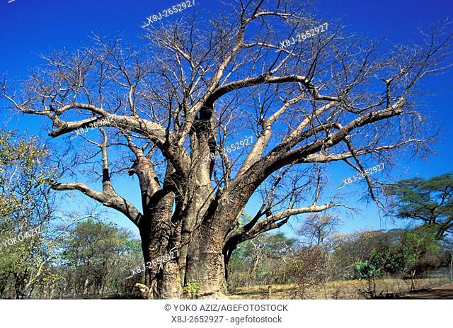 botswana, okawango delta