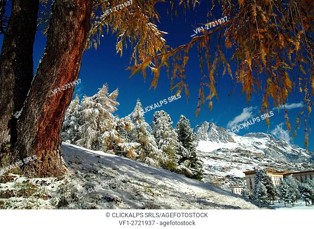 Colors of autumn at Maloja Pass. Canton of Graubünden Switzerland, Europe
