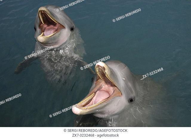 Sanctuary Bay, Grand Bahama. Bahamas. UNEXSO. Program Swim and close encounter with the dolphins