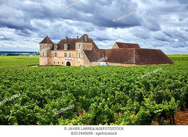 Pinot noir vineyards, Chateau du Clos de Vougeot, Côte de Nuits, Côte d'Or, Burgundy Region, Bourgogne, France, Europe