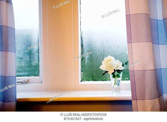 Window detail flower