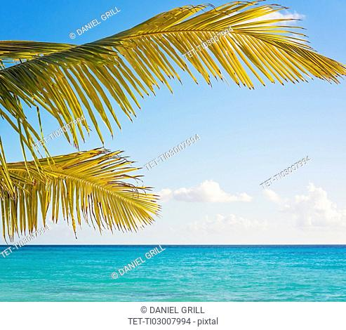 Palm tree against turquoise sea
