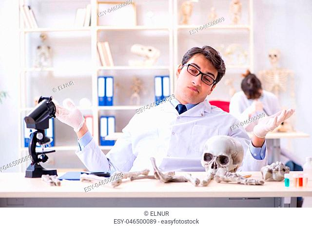 Professor studying human skeleton in lab