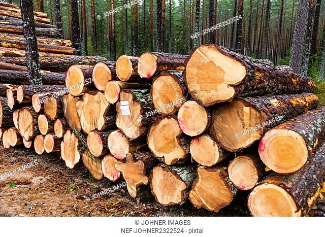 Cut logs at the edge of forest