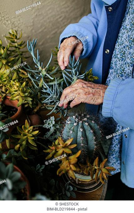 Older mixed race woman caring for potted plants
