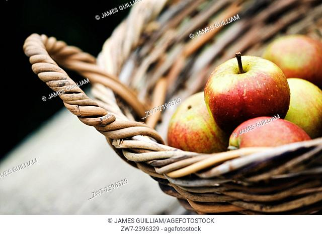 Apples in willow basket Variety Cox on rustic timber table