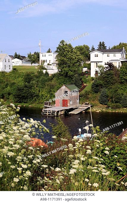 wildflowers at the old traditional fishing village Herring Cove, Nova Scotia, Atlantic Canada