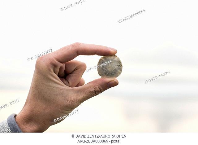 A woman holds a small sand dollar between her fingers in Morro Bay, Calif., on March 2, 2014