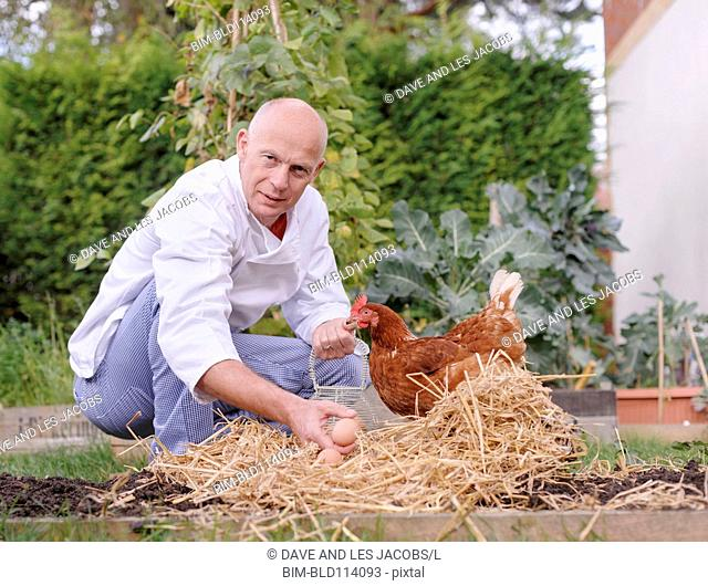 Caucasian chef harvesting chicken eggs